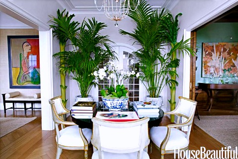 Tropi-cool :: The Palm Tree